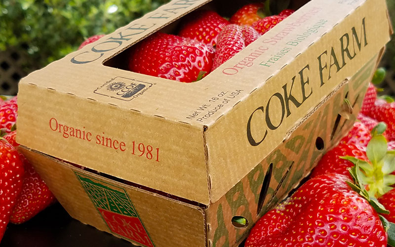 Organic Strawberries - Coke Farm - San Juan Bautista, California