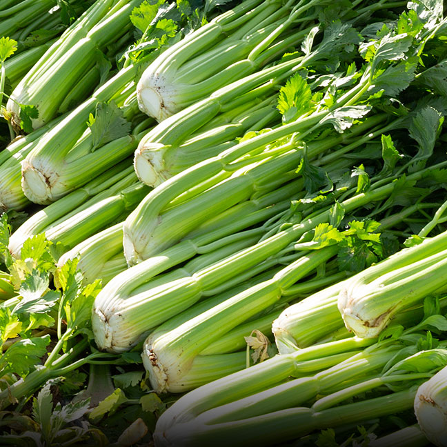 Organic Celery- Coke Farm