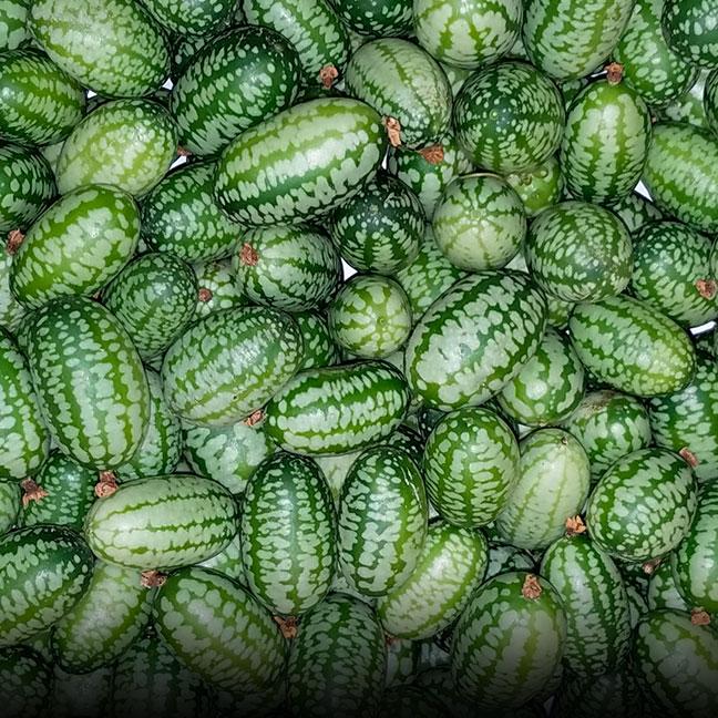 Lemon Cucumber - Coke Farm - San Juan Bautista, California