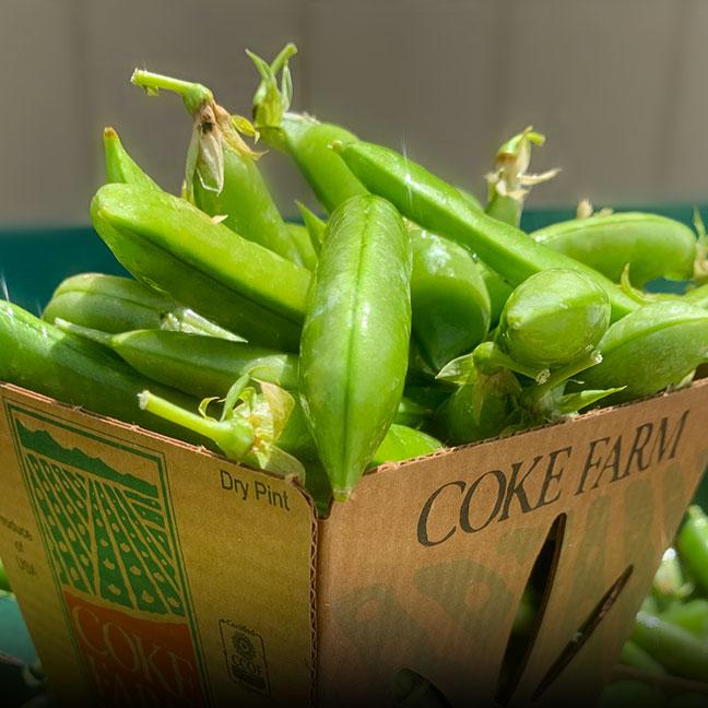 Organic Peas - Coke Farm