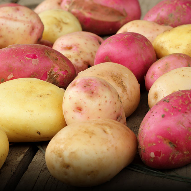 Organic Potatoes - Coke Farm