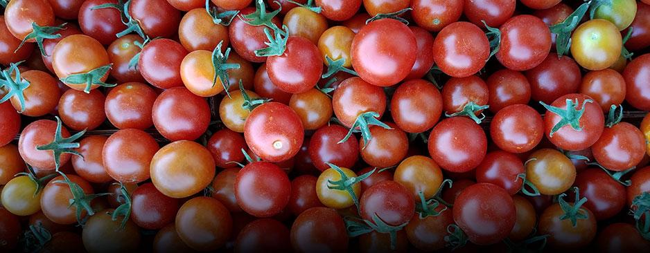 Organic Tomatoes - Coke Farm - San Juan Bautista, California